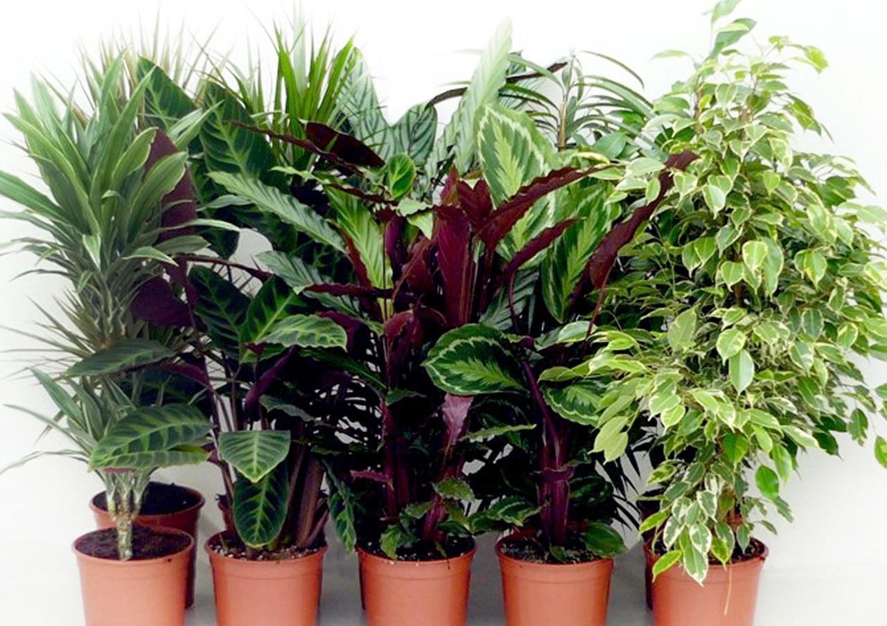 Dedeman mix plante verzi h110 d21cm dedicat planurilor tale for Plante decorative