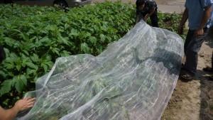 dedeman plasa protectie plante anti insecte polietilena 5 m dedicat planurilor tale. Black Bedroom Furniture Sets. Home Design Ideas
