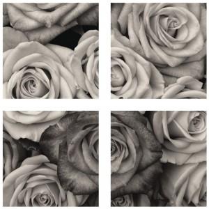Tablou canvas 4 piese, PT1204 Trandafiri, panza + sasiu brad, stil floral, 40 x 40 cm