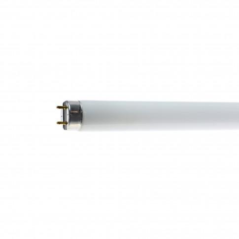 Neon 36W Philips TL-D Super 80 G13 lumina rece T8 1199 mm