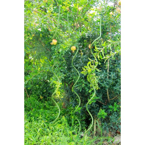 Suport pentru plante Versay SR-6-120, spiralat, otel plasticat, verde, 120 cm