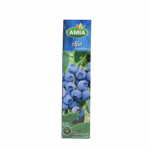 Arbust fructifer afin - Vaccinium Corymbosum 1839
