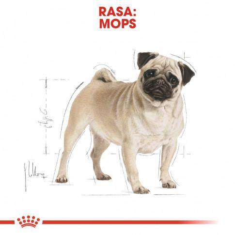 Hrana uscata pentru caini, Royal Canin, Pug, adult, 1.5kg