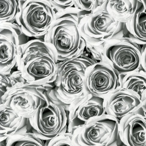 Autocolant decorativ Gekkofix Roses 12856, alb + negru, 0.45 x 15 m