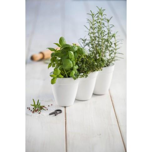 Ghiveci din plastic Ivy Herbs Curver, alb, 33 x 12.2 x 12.7 cm, set 3 bucati