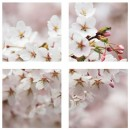 Tablou canvas 4 piese, PT1206 Flori de cires, panza + sasiu brad, stil floral, 40 x 40 cm