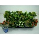 Planta interior Kalanchoe mix D 9 cm