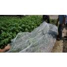 Plasa protectie anti-insecte in-2