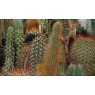 Cactus mix ghiveci d10cm