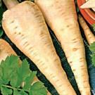 Seminte pastarnac White Gem