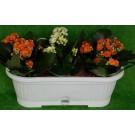Jardiniera plastic Verbena cu tava, interior/exterior, alba, 30 x 10,5 cm