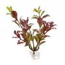 Planta decorativa Ludwigia-S, pentru acvariu pesti