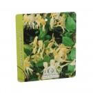 Arbust ornamental lonicera cataratoare - mana Maicii Domnului, H 100 - 120 cm