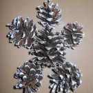 Decoratiuni Pinus Sylvestris - Alb