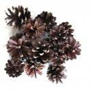 Decoratiuni Pinus Sylvestris - Natur