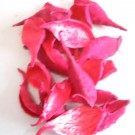 Decoratiuni Tutun Salbatic - Rosu
