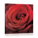 Tablou 03469, pe panza, stil modern, Trandafir rosu, 60 x 60 cm