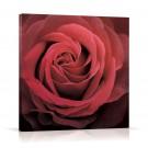 Tablou 03470, pe panza, stil modern, Trandafir roz, 60 x 60 cm
