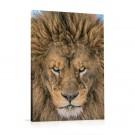 Tablou 03213, pe panza, stil modern, Portret leu, 60 x 90 cm
