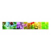 Panou decorativ din sticla, pentru bucatarie / baie Glasfabrik DKEMG30, aspect floral, 1400 x 600 x 4 mm