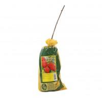 Arbusti fructiferi - zmeur 1854