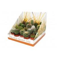 Planta interior - Cactus mix, D 5.5 cm