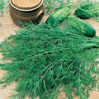 Seminte legume Agrosel, marar Common