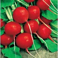 Seminte legume Agrosel, ridichi de luna Cherry Belle