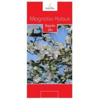 Arbore ornamental Magnolia kobus, H 100-150 cm