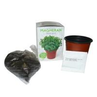 Planta interior Kit plante aromatice mix de specii