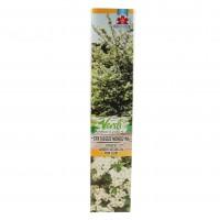 Arbust ornamental Crataegus Monogyna, H 15 - 25 cm