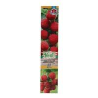 Arbust fructifer - zmeur Rubus idaeus, H 15 - 25 cm