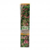 Arbust ornamental Lonicera tatarica, H 15 - 25 cm