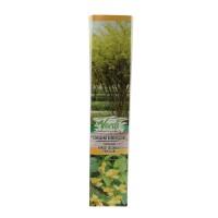 Arbust decorativ Caragana arborescens, H 15 - 25 cm