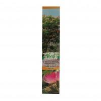 Arbore decorativ Albizia julibrissin, H 15 - 25 cm