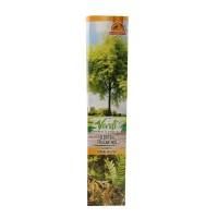 Arbore ornamental Gleditsia triacanthos, H 15 - 25 cm