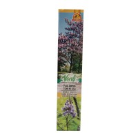 Arbore ornamental Paulownia tomentosa, H 15 - 25 cm