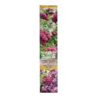 Arbust ornamental liliac - Syringa vulgaris, H 15 - 25 cm