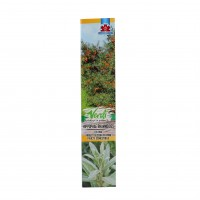 Arbust fructifer catina - Hipopphae Rhamnoides, H 15 - 25 cm