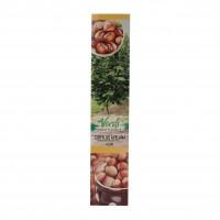 Pom fructifer alun - Corylus avelana, H 15 - 25 cm