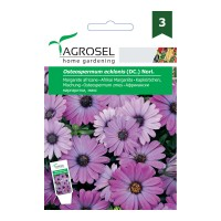 Seminte flori margarete africane AS-PG3