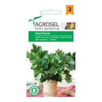 Seminte legume telina de frunze Pascal giant AS