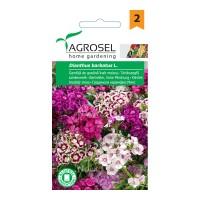 Seminte flori garofita de gradina AS-PG2