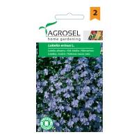 Seminte flori Lobelia, albastru AS-PG2