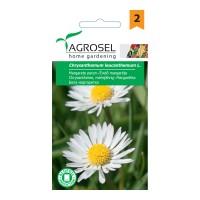 Seminte flori margarete perene AS-PG2
