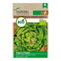 Seminte legume salata Regina di Maggio Eco AS