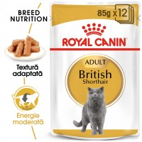 Hrana umeda pentru pisici, Royal Canin, British Shorthair, adult, 12 x 85g