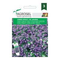 Seminte flori Agrosel, curgatoare, lobelia