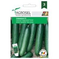 Seminte legume Agrosel, castraveti Colosseum