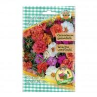 Seminte flori Micul Gradinar, flori de piatra, Portulaca grandiflora